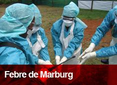 Febre de Marburg