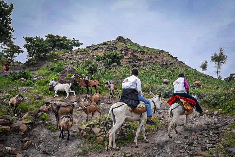 No Sudão, o acesso a algumas áreas remotas só pode ser feito em burros ou camelos