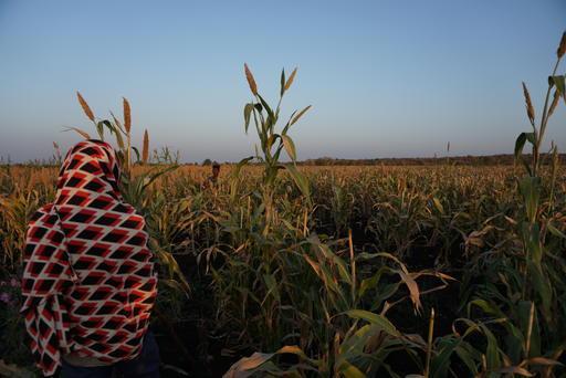Não andar com sapatos abertos pode parecer uma decisão banal, mas é fundamental para os trabalhadores que fazem a colheita em Amhara, na Etiópia. Eles correm todos os dias o risco de serem picados por um dos 20 tipos de cobras venenosas da região.
