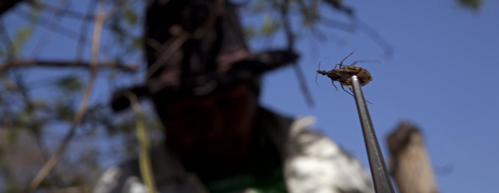 5 recomendações sobre a COVID-19 para pessoas que vivem com Chagas