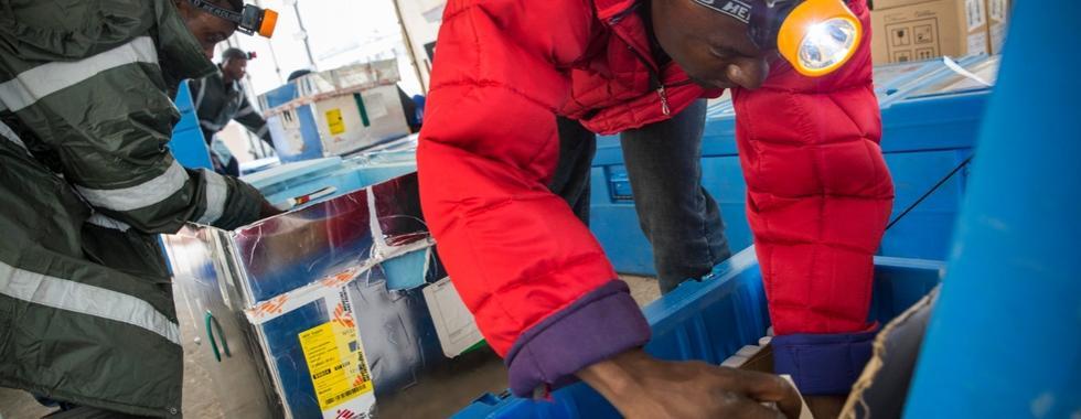 MSF mobiliza centenas de profissionais para campanha de vacinação massiva contra febre amarela em Kinshasa, RDC