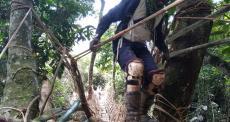 A ponte em lianas
