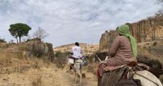 Sudão: Equipes médicas de MSF usam camelos e burros para chegar a vilarejos remotos e prestar assistência médica à população