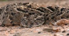 O problema negligenciado das picadas de cobra no Sudão do Sul